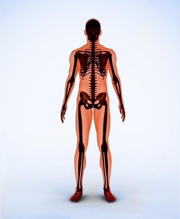 Orange digital skeleton standing photo