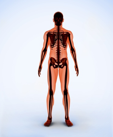 Orange digital skeleton standing Stock Photo - 18116107