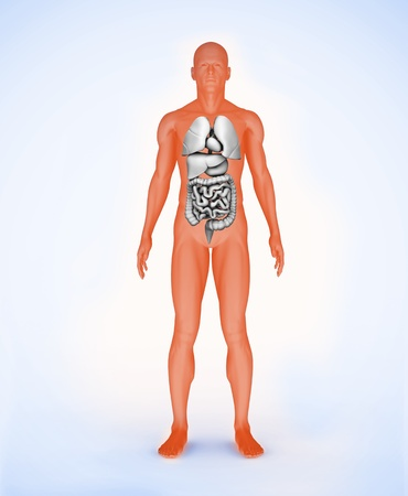 Orange digital body with visible organs standing Stock Photo - 18116104