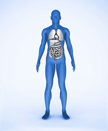 Blue digital human standing with visible organs Stock Photo - 18116113