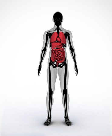 Black and grey digital skeleton body standing with visible organs photo