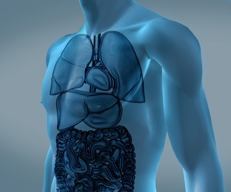 Transparent digital blue body with organs against a digital background Stock Photo - 18116324