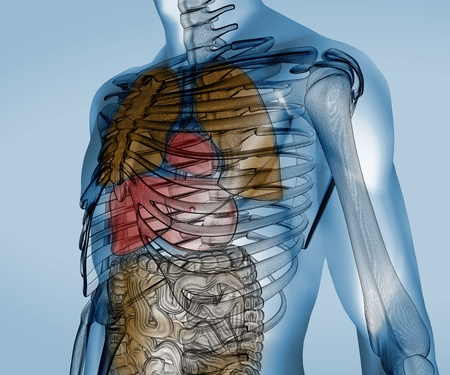 Colorful transparent digital body with organs against a digital background photo