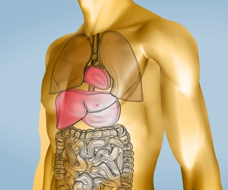 Yellow and transparent digital body with organs against a blue background Stock Photo - 26701407