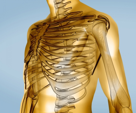 rib cage: Yellow digital body with visible skeleton on blue background
