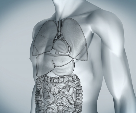 Grey digital body with visible organs against a digital background Stock Photo - 18116323