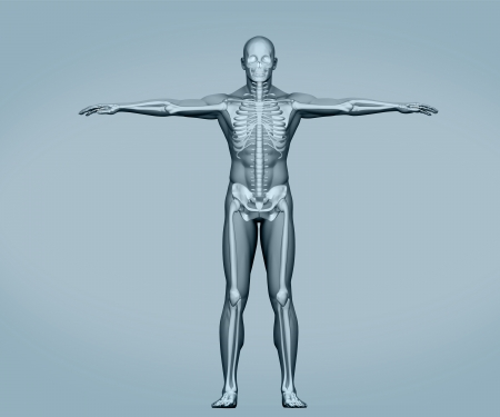 Grey digital skeleton body standing on grey background Stock Photo - 18118575