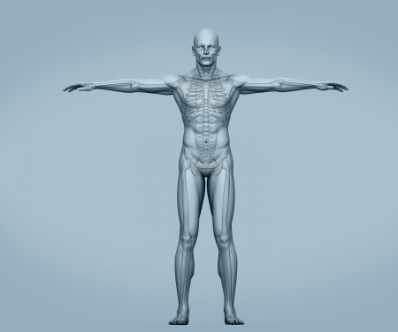 rib cage: Grey body digital skeleton with muscles on grey background Stock Photo