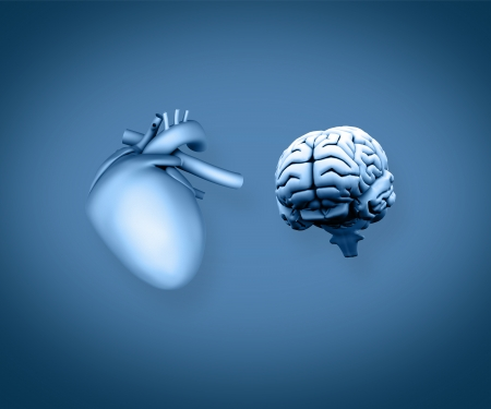 Heart and brain on blue background photo