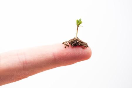 fingertip: Seedling on a fingertip on white background