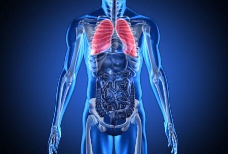 rib cage: Digital blue human with highlighted lungs on dark blue background