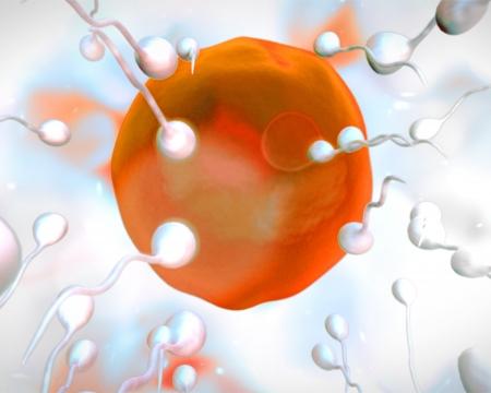 semen: Orange egg being fertilized on white background