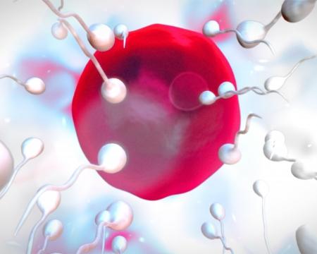 semen: Pink egg being fertilized on white background