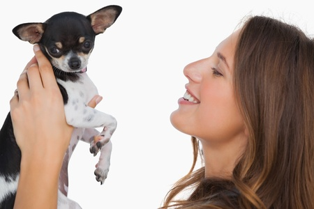 Smiling woman looking at her chihuahua on white background photo