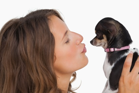 Pretty woman looking at her chihuahua on white background photo