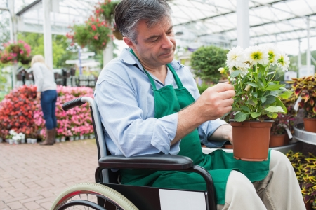 garden staff: Garden center worker in wheelchair holding potted plant in greenhouse in garden center