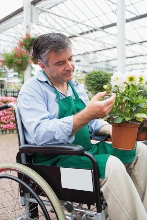 garden staff: Garden center worker in wheelchair touching and admiring potted plant in greenhouse of garden center