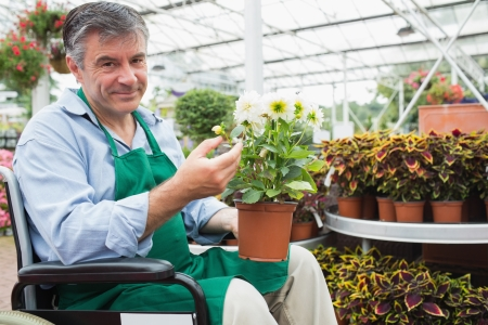 garden staff: Gardne center worker in a wheelchair holding a flower pot in a greenhouse