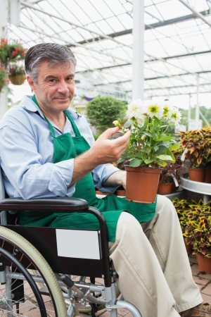 garden center: Garden center worker in wheelchair holding potted plant in greenhouse of garden center Stock Photo