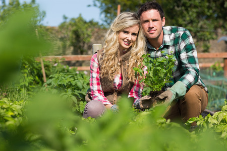 Young couple holding a plant while crouching in their garden photo