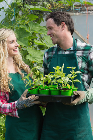 smiling woman in a greenhouse: Laughing couple holding carton of small plants in a green house