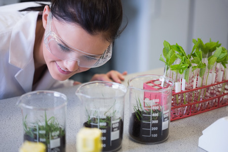 Young female researcher looking at young plants at the laboratory photo