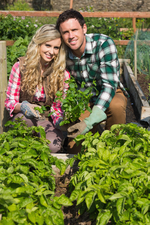 Young couple crouhing in their garden holding a plant smiling at camera photo