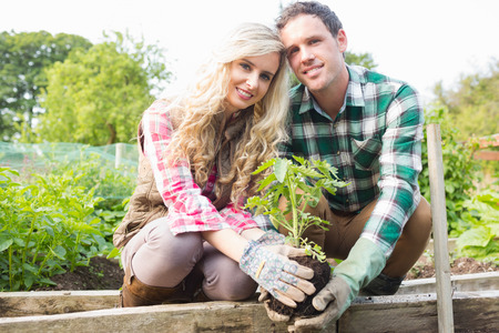Young couple planting a shrub in their garden smiling at camera photo