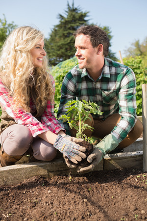 Smiling young couple planting a shrub while smiling at each other in their garden photo