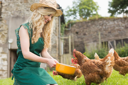 Young woman feeding her chickens kneeling on the grass photo