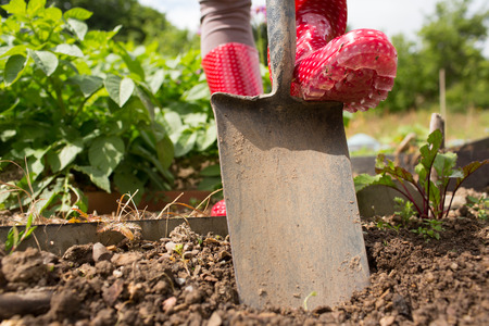 gum boots: Woman wearing rubber boots working in the garden using a shovel Stock Photo