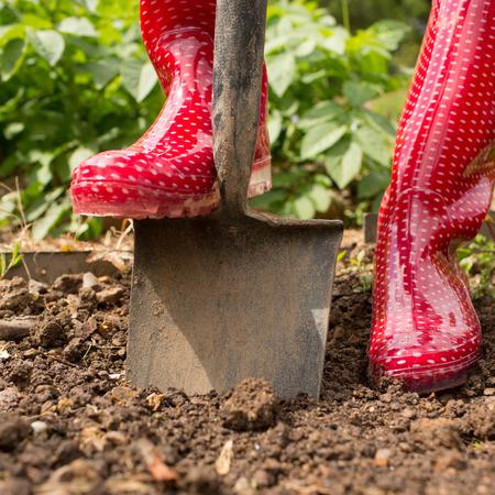 jardinero: Mujer con botas de goma roja usando una pala en su jardín