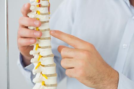 columna vertebral: Cierre de hombre apuntando m�dicos mano en modelo de esqueleto en la Oficina brillante