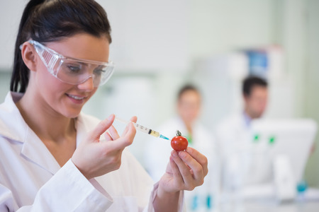 Close-up of a scientific researcher injecting a tomato at the lab photo