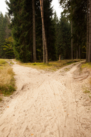 Narrow dirt road leading to two different track along trees in the forest Stock Photo