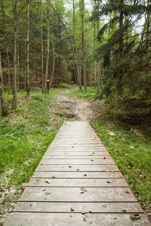 Narrow wooden walkway along lush forest