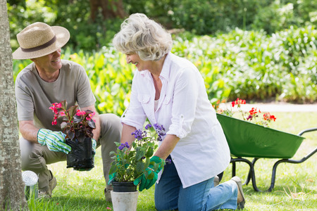 Smiling mature couple engaged in gardening