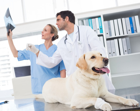 Veterinarian with colleague discussing Xray of dog in clinic photo