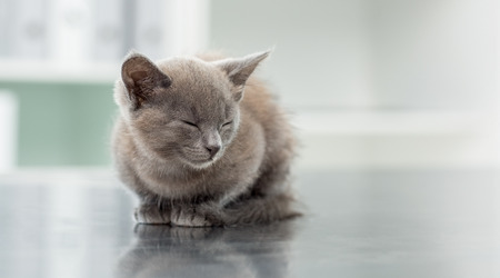 Cute kitten with eyes closed in veterinary office photo