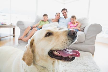 mujeres felices: Familia feliz, sentado en el sof� con su mascota amarilla de labrador en primer plano como en casa en la sala de estar Foto de archivo