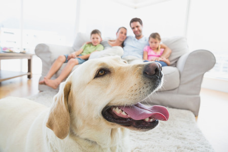 Happy family sitting on couch with their pet yellow labrador in foreground at home in the living room Stock Photo