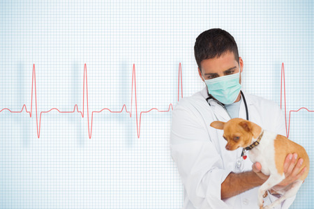 Vet holding chihuahua against ecg line on white background with grid photo