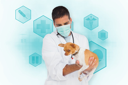 Vet holding chihuahua against blue medical interface with icons photo