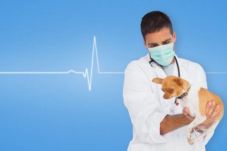 Vet holding chihuahua against medical background with blue ecg line photo
