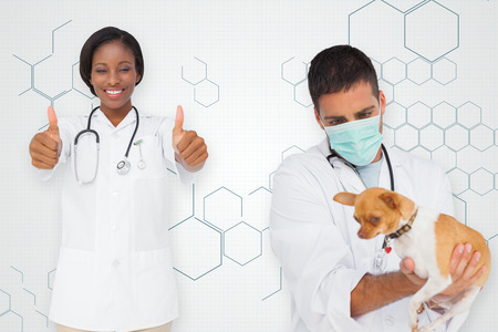 Composite image of vet holding chihuahua and nurse showing thumbs up against chemical structure in grey and white photo
