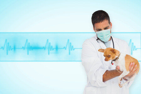 Vet in protective mask checking chihuahua against medical background with blue ecg line photo