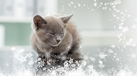 Composite image of a Kitten in veterinary office against snow photo