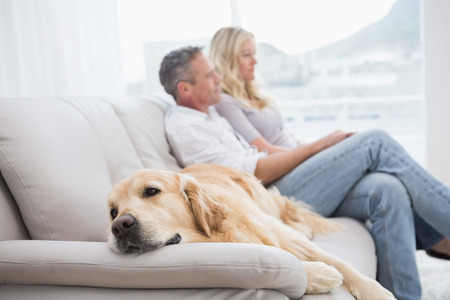 domiciles: Dog lying on the couch with the couple sitting behind at home in the living room Stock Photo
