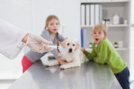 perro asustado: Vet usando una jeringa para un perro delante de sus propietarios asustados en el consultorio médico