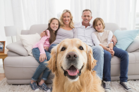 animal family: Family sitting on the couch with golden retriever in foreground at home in the living room